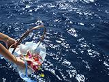 散骨と一緒に海に投げ入れても良いものはありますか?